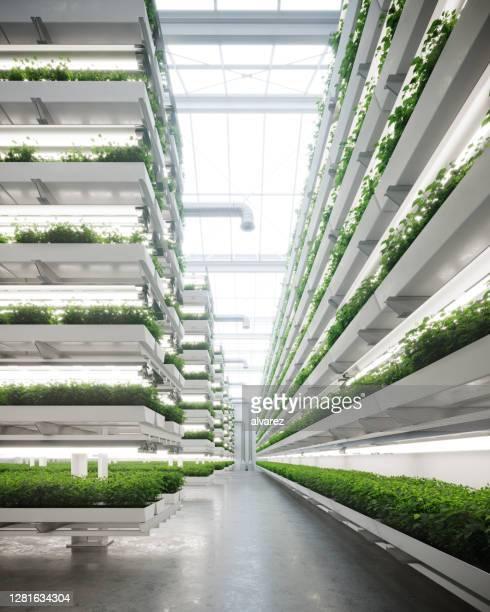 azienda agricola verticale generata digitalmente all'interno di una serra - composizione verticale foto e immagini stock