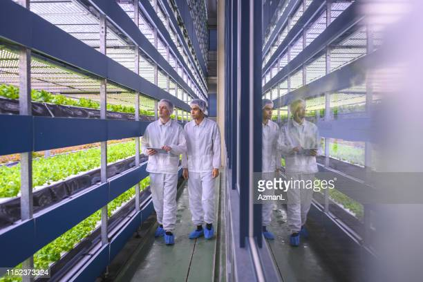 vertical farmers monitoring the future of sustainability - shoe covers stock pictures, royalty-free photos & images