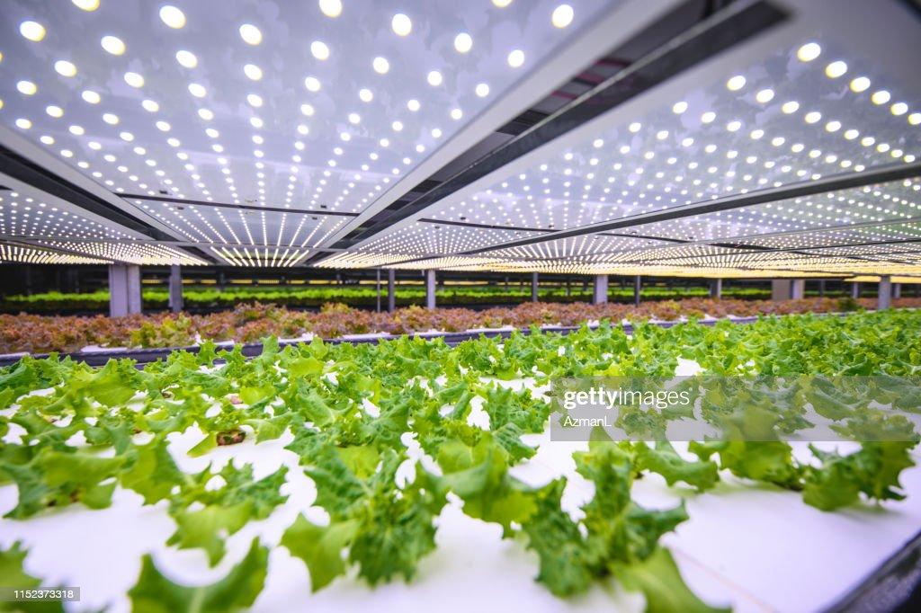 Verticale landbouw biedt een weg naar een duurzame toekomst : Stockfoto