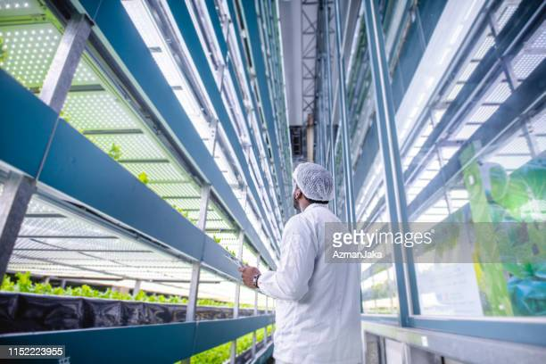 生きたレタスの列を調べる縦の農業の専門家 - スマート農業 ストックフォトと画像
