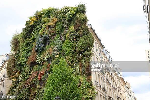Vertical garden on façade of residential building in central Paris