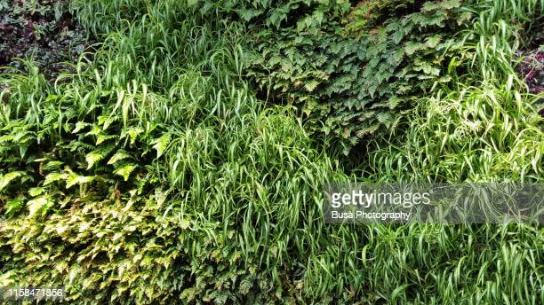 vertical green wall - backgrounds stock pictures, royalty-free photos & images