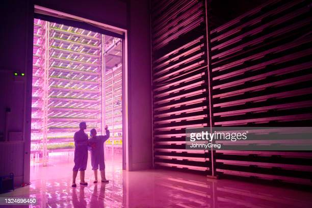 vertical hydroponic specialists conversing in dark chamber - innovation stock pictures, royalty-free photos & images