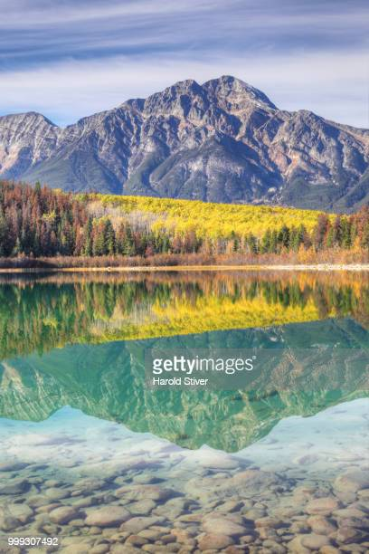 Vertical of aspens reflected in the Rocky Mountains