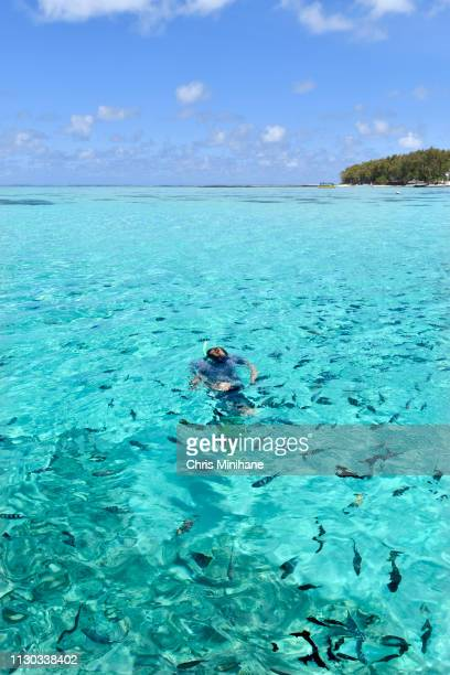 vertical photograph of a tourist swimming and snorkeling with fish in the ocean and sea on a tropical island - ile maurice photos et images de collection