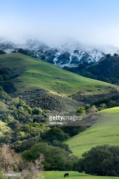 vertical shot of rare snowfall on mission peak, fremont, ca - fremont california stock pictures, royalty-free photos & images