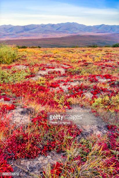 Vertical shot - Tundra in Autumn, at the Arcticle circle crossing line on the Dempster Highway, Yukon, Canada