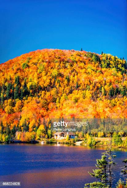 Vertical Shot-Autumn in the Laurentian Mountains of Quebec, Canada