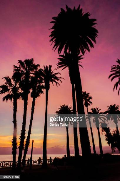 vertical silhouette palms - santa monica stock pictures, royalty-free photos & images