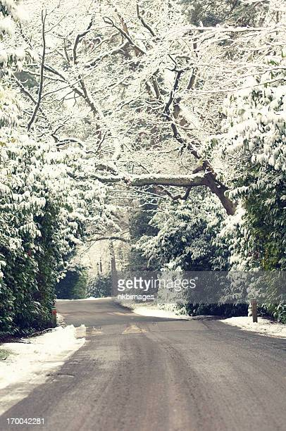 vertical snow covered trees along road in english neighborhood - weybridge stock photos and pictures