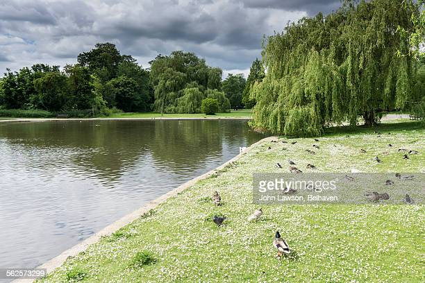 verulamium park, st albans, hertfordshire - hertfordshire stock pictures, royalty-free photos & images