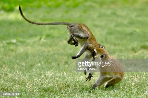 Spiel Monkey