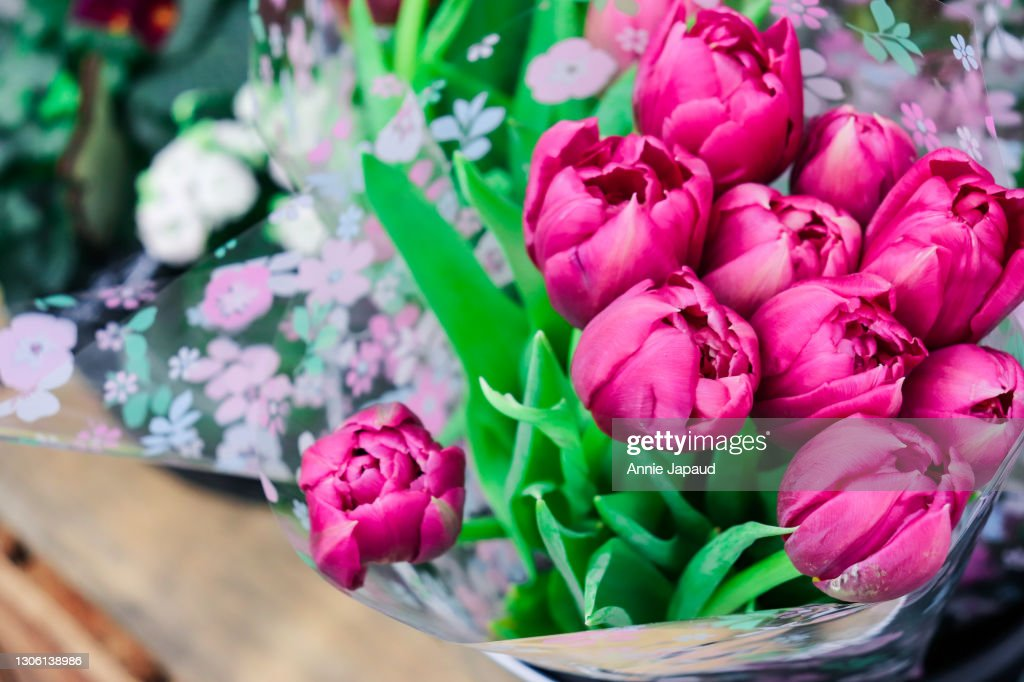 Very Beautiful Pink Tulips Bouquet Flower Background High