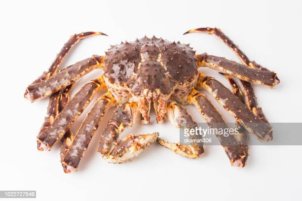 very big alaska king crab with white background isolated - alaskan king crab stock pictures, royalty-free photos & images