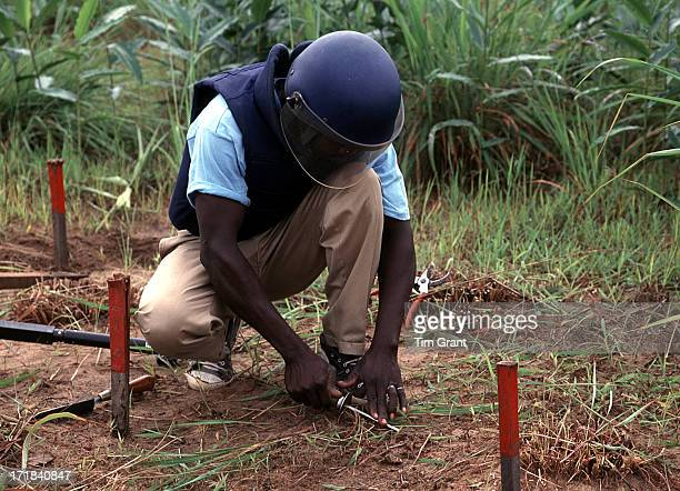 CONTENT] A very dangerous job preformed by a brave man An Angolan deminer clearing a busy path and corn fields