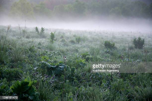 very early dawn in the mountains, fog over meadows, western caucasus - argenberg stock-fotos und bilder