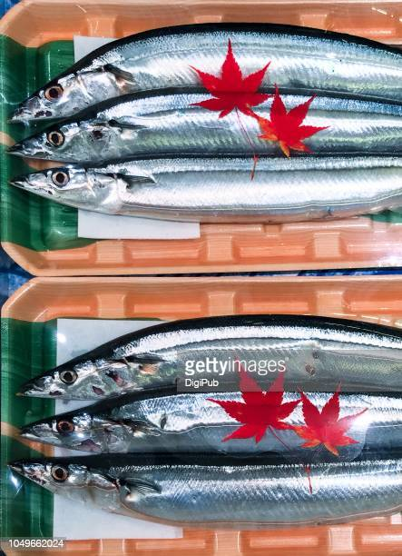 very fresh pacific saury in package decorated with red iroha momoji maple leaf plastic paper cuttings display for sale - pike fish stock pictures, royalty-free photos & images
