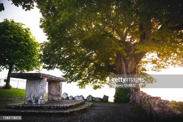 mycket gammalt kalkträd på våren med stenbord i toppen av stensteg och med ljus solnedgång - ain bildbanksfoton och bilder