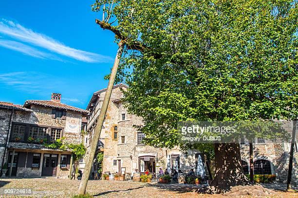 very old lime tree on the perouges medieval village square - ain bildbanksfoton och bilder