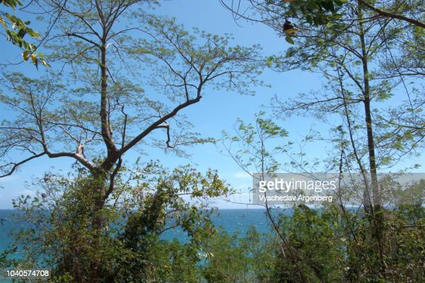 very rare, endemic flora of palawan island, philippines - argenberg stock pictures, royalty-free photos & images