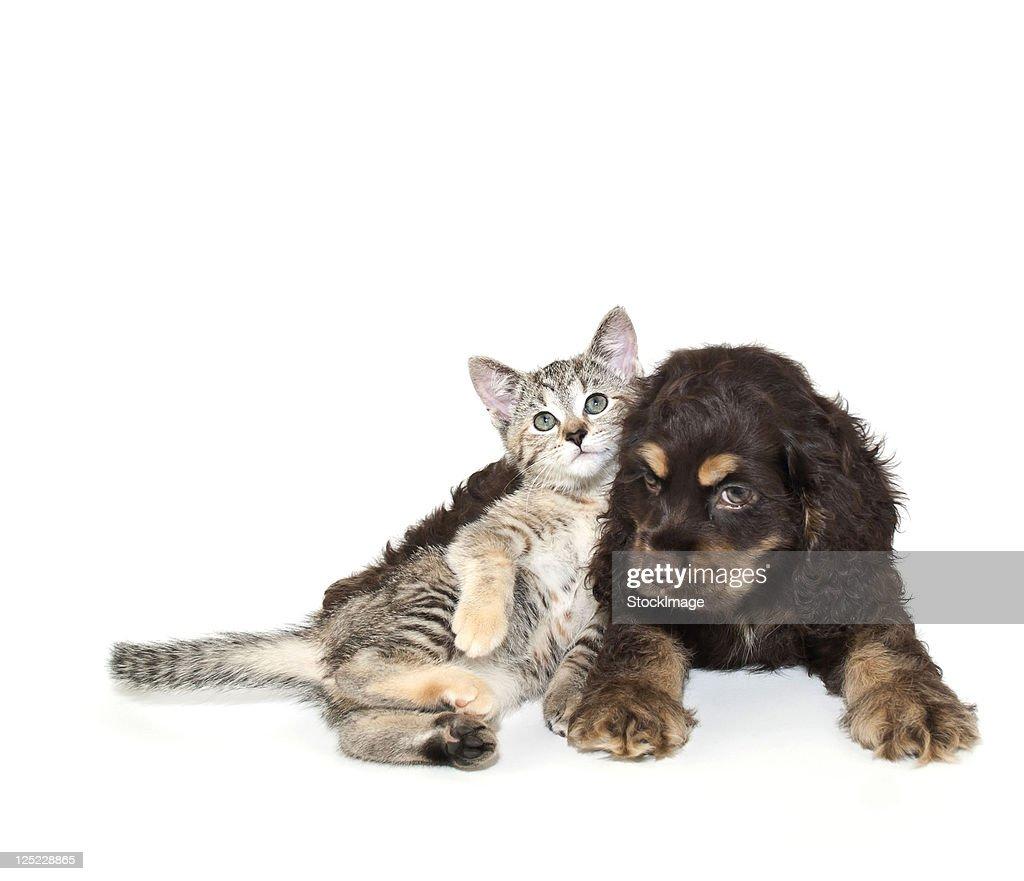 Very sweet kitten lying on puppy : Foto de stock