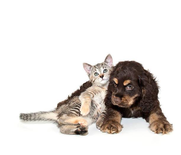 Very sweet kitten lying on puppy