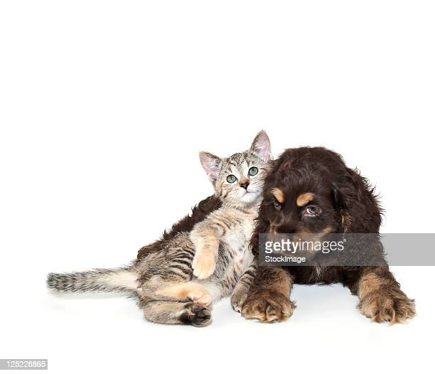 Very sweet kitten lying on puppy