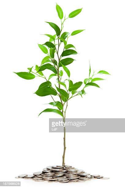 Très jeune arbre isolé avec des pièces de
