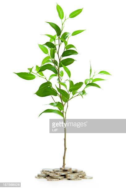 Very young tree isolated with pounds