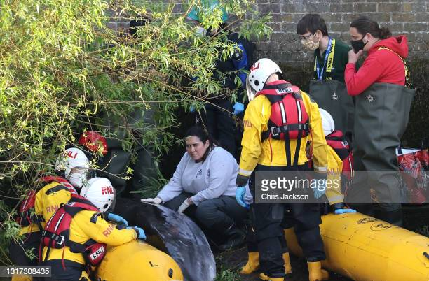 Vet and British Divers Marine Life Rescuers look on as they attempt to rescue a juvenile minke whale stranded in the river Thames on May 10, 2021 in...