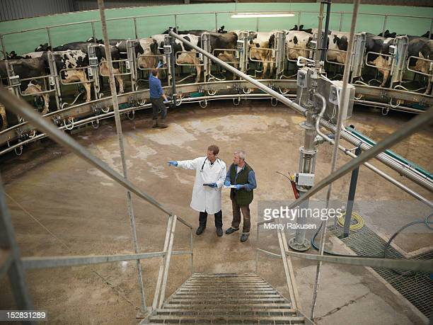 vet and farmer at bottom on steps in rotary milking parlour on dairy farm with cows, high angle - mann beim melken stock-fotos und bilder