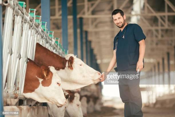 Tierarzt-Check-Kühe in der Scheune