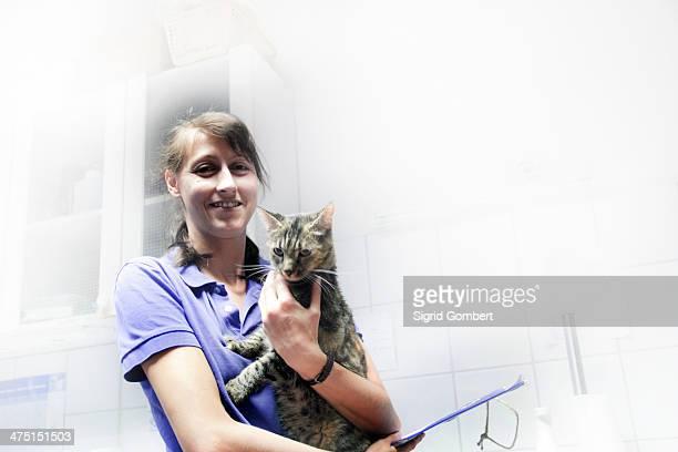 vet holding domestic cat - sigrid gombert stockfoto's en -beelden