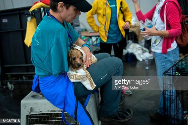 A vet holds a dog at a shelter in the George R Brown Convention Center during the aftermath of Hurricane Harvey on August 28 2017 in Houston Texas...