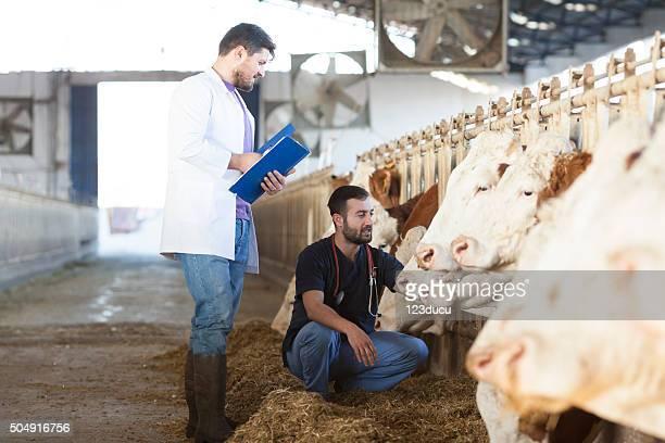 Tierarzt In der Farm