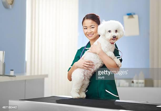 vet nurse and bichon frise dog