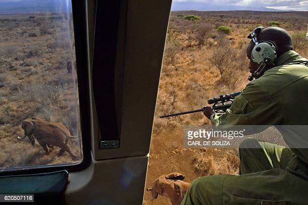 A vet shoots an elephant with a tranquilizer gun from a helicopter outside Amboseli National Park on November 2 2016 The International Fund for...