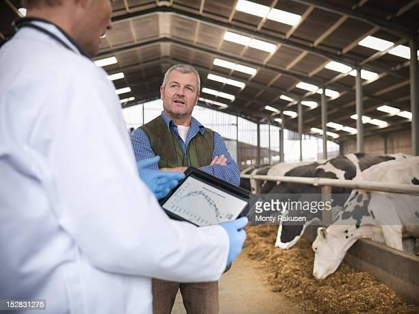 vet with digital tablet and farmer discussing cows in barn on dairy farm - grupo mediano de animales - fotografias e filmes do acervo