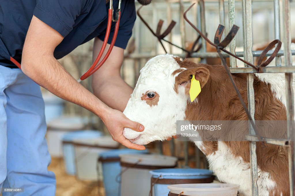 Veterinario de trabajo : Foto de stock