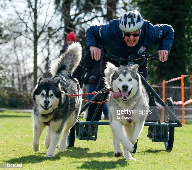 Veteran practices ahead of a short course race with Alaskan Malamute sled dogs during the Phoenix Winter Games in Catterick Garrison on March 04,...
