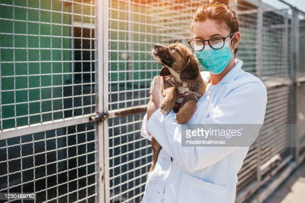veterinario al rifugio per animali che controlla la salute dei cani. - animale selvatico foto e immagini stock