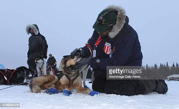 Veterinarian Bruce Nwadike checks the dogs of musher Mike Williams Jr at the Nikolai checkpoint during the 2014 Iditarod Trail Sled Dog Race on...