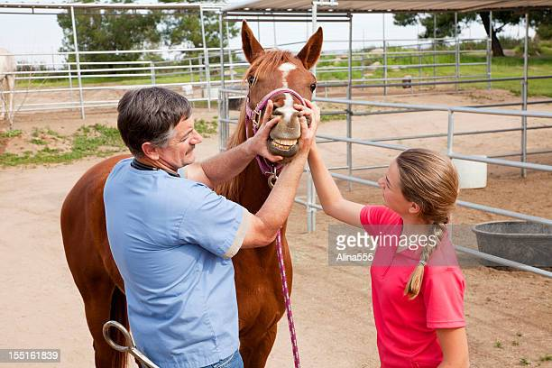 Veterinarian checking horse's teeth