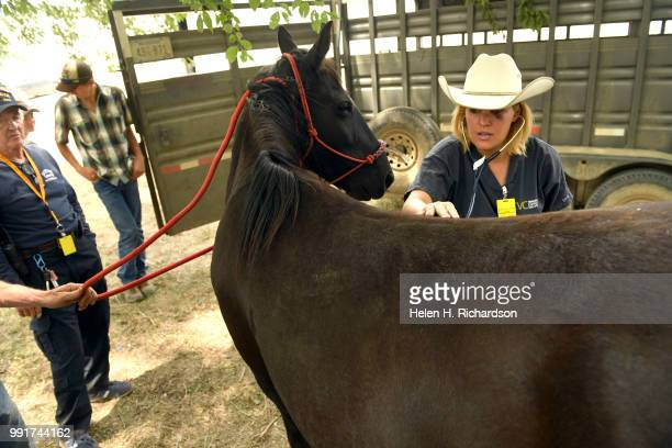 Veterinarian Dr Romy Nicoletta right checks out Dancer a horse owned by Dennis Ceremuga left after rescuing him and two others from the burned area...