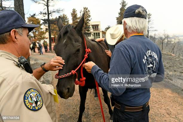 Veterinarian Dr Romy Nicoletta second from right checks out Dancer a horse owned by Dennis Ceremuga right after rescuing them one week after the...