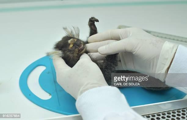 TOPSHOT A veterinarian examines a dead monkey at the Municipal Institute of Veterinary Medicine in Rio de Janeiro Brazil on February 8 2018 According...