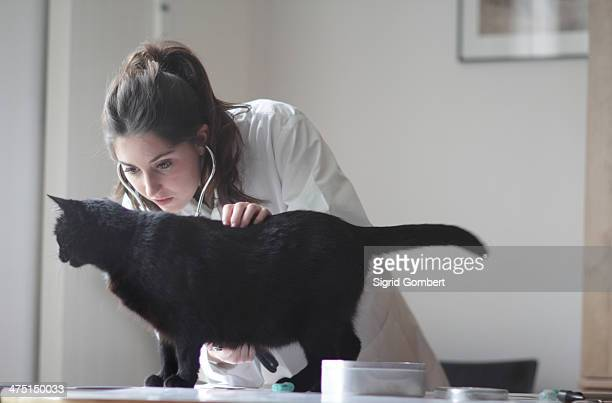 veterinarian examining black cat - sigrid gombert stock-fotos und bilder