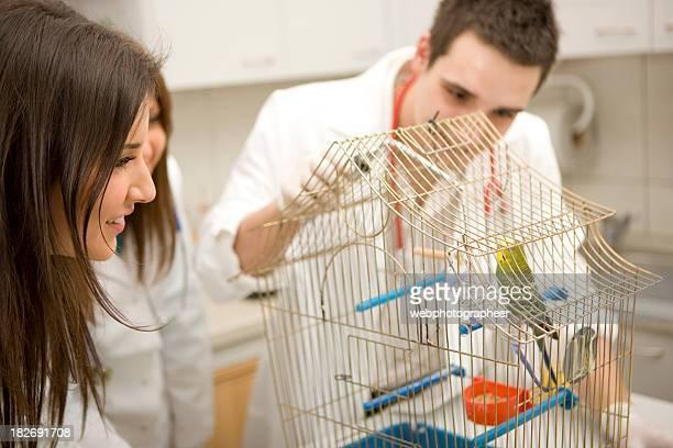 Vétérinaire examiner des perroquets