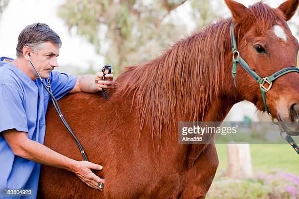 veterinário examinar a cavalo - cavalo família do cavalo - fotografias e filmes do acervo