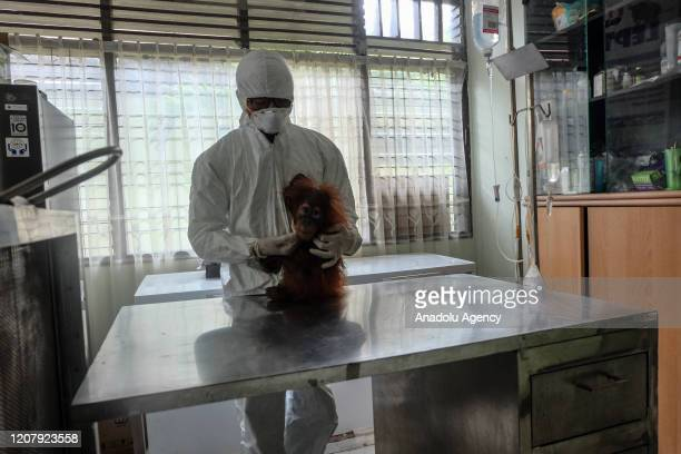 A veterinarian from Natural Resource Conservation Authority is seen wearing protective suit to prevent coronavirus from animals while observing...
